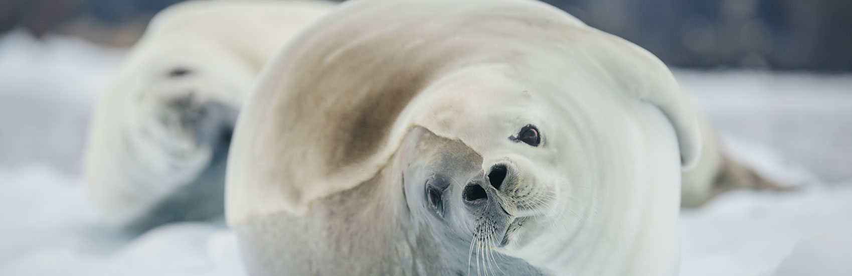 Early Bird Savings to Antarctica with Intrepid Travel 3