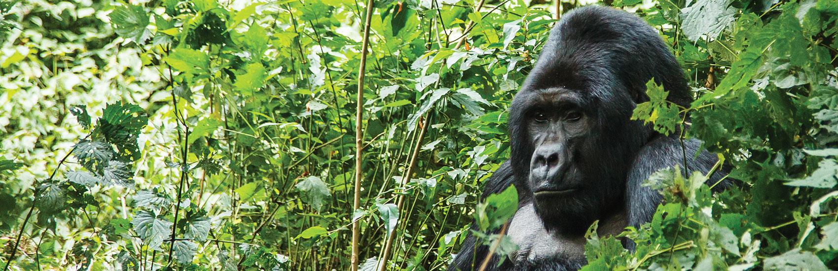 Extraordinary African Adventures 5