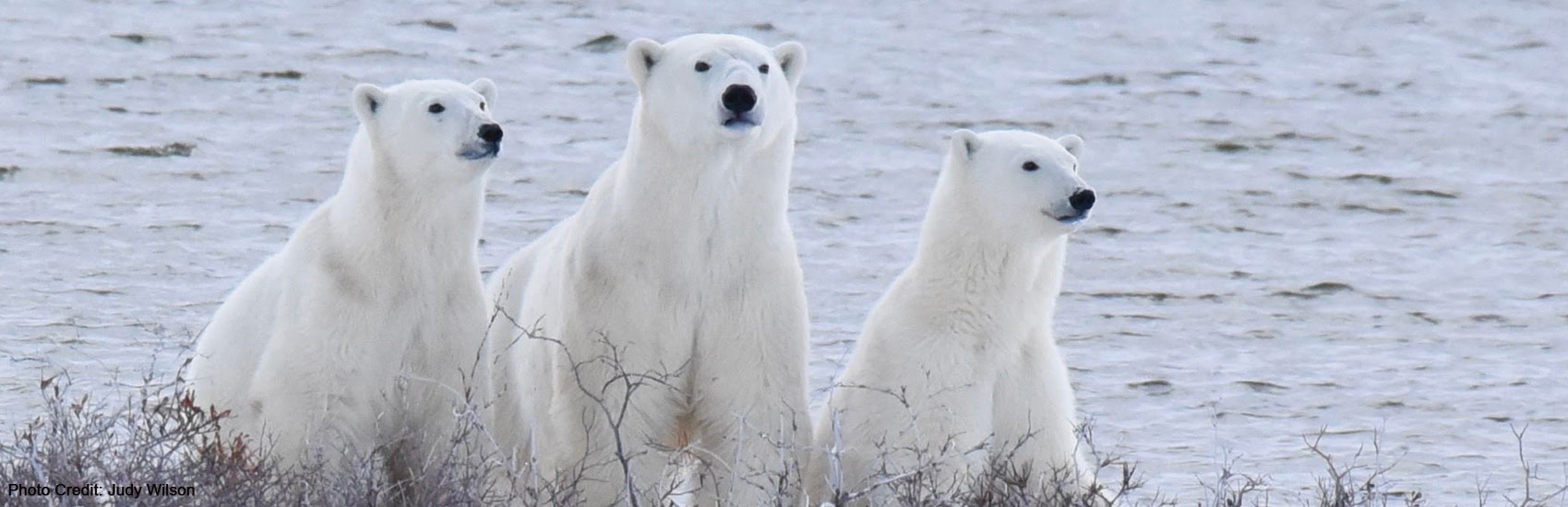 Polar Bear Expeditions with Natural Habitat Adventures 5