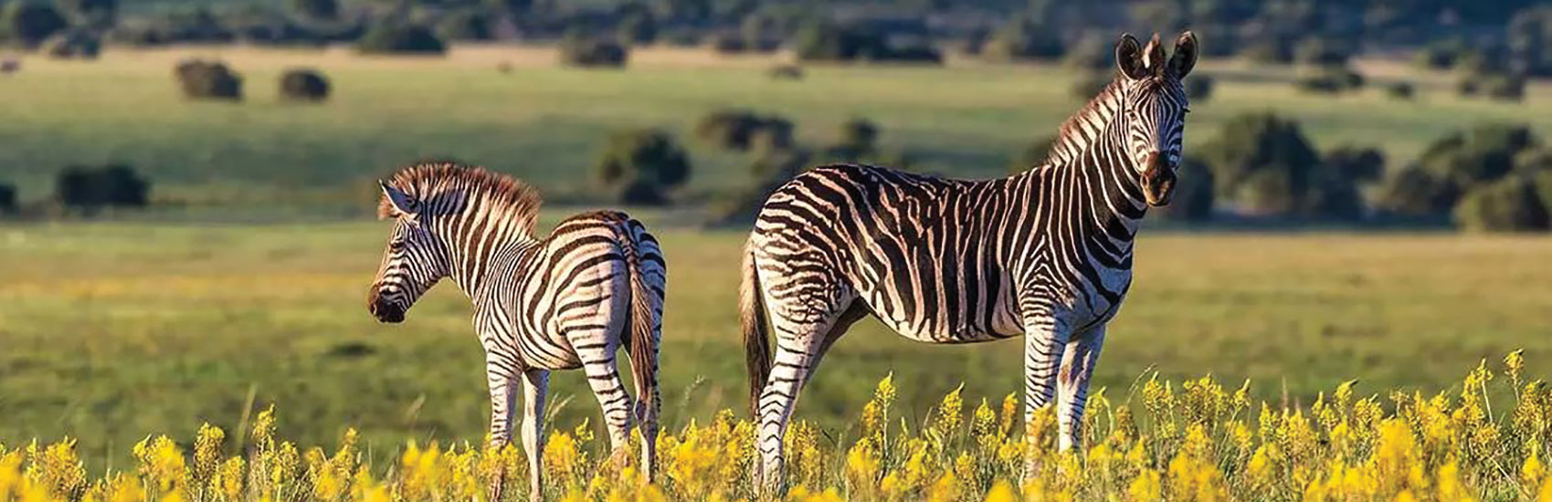 Majestic South Africa with African Travel 4