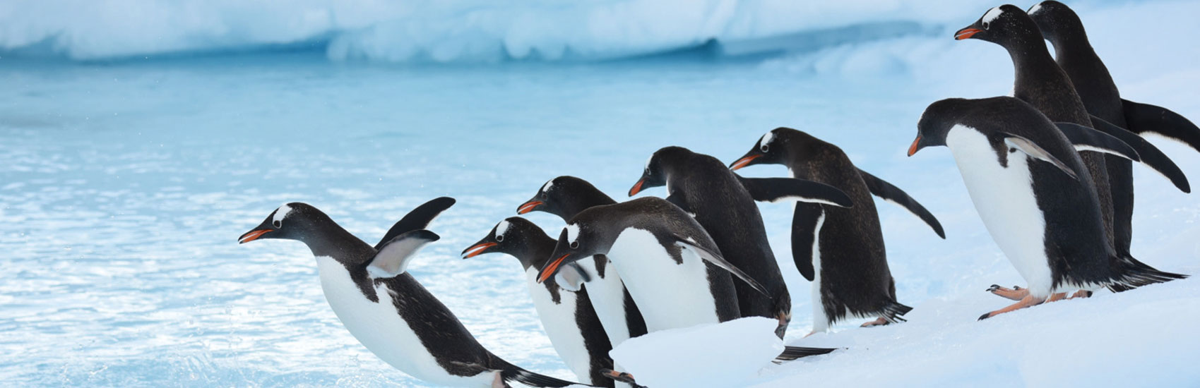 Air Credit Offer with Ponant to Antarctica 4