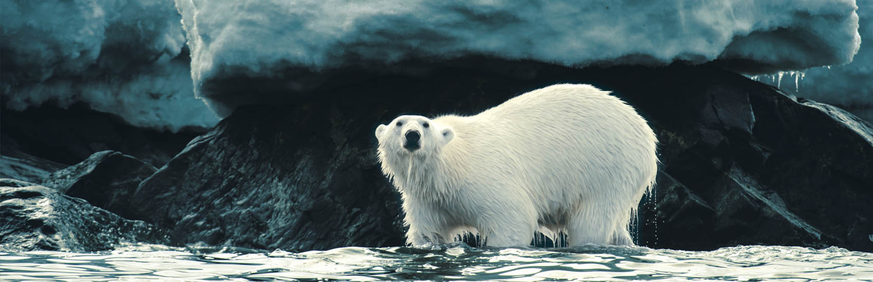 Polar Regions with Silversea Expeditions 1