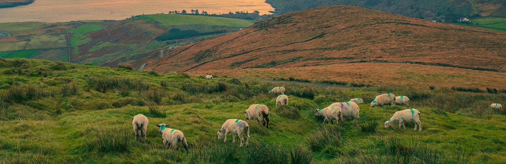 Explore Ireland 1