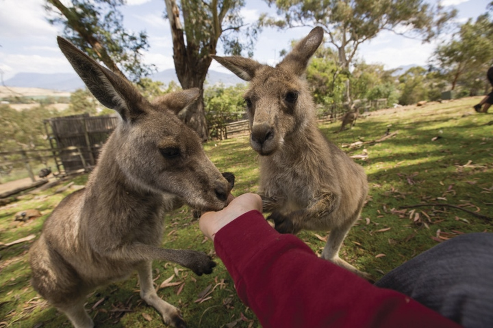 Save on Australia, New Zealand and the South Pacific