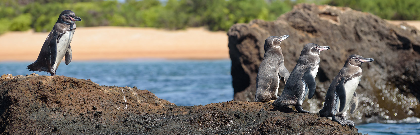 When to explore the Galapagos Islands 4