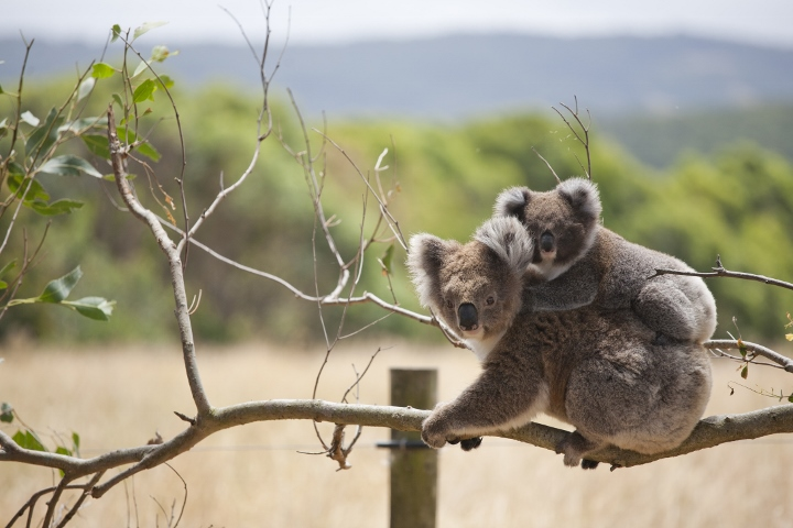 Australia and New Zealand with Collette Vacations