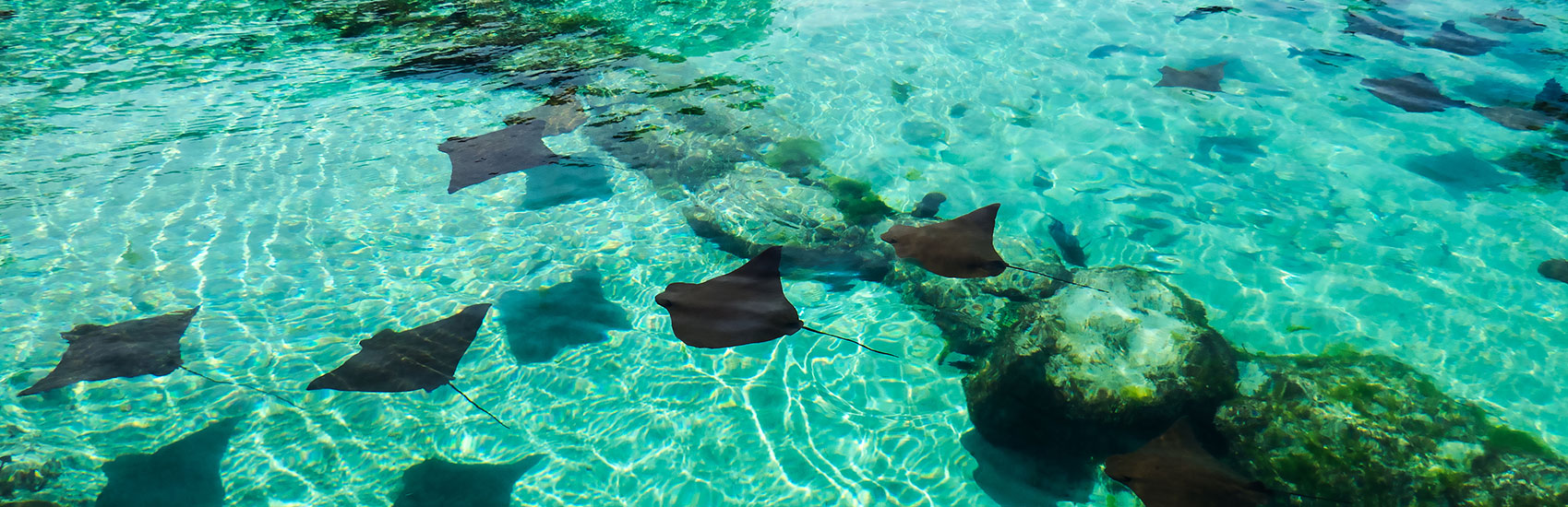 Western  Caribbean March Break 2023 Cruise 0