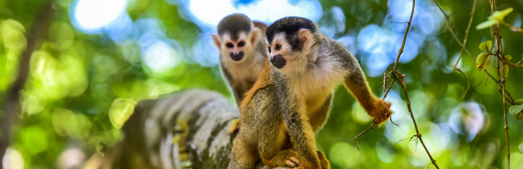 Costa Rica with WestJet Vacations 0
