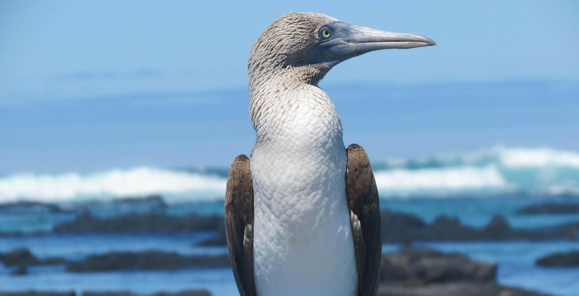 Savings on 2019 Avalon Galapagos Island Cruises!