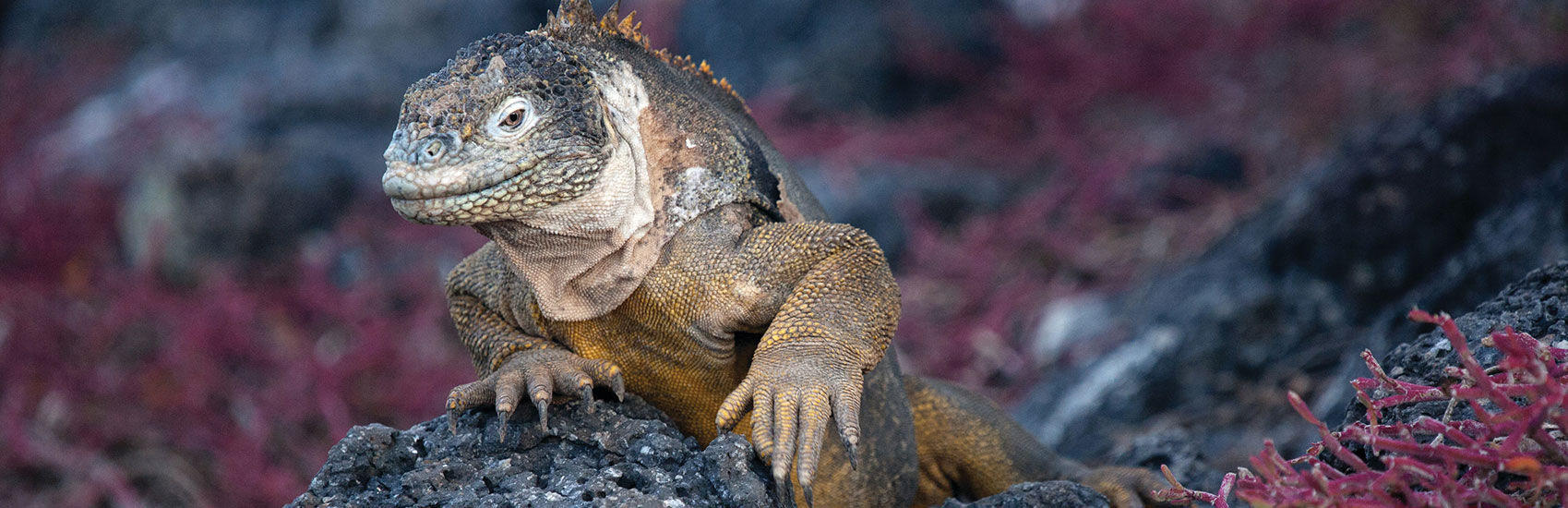 Galapagos Conservancy with Silversea Cruises 3