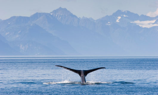 Alaska with Vision Travel