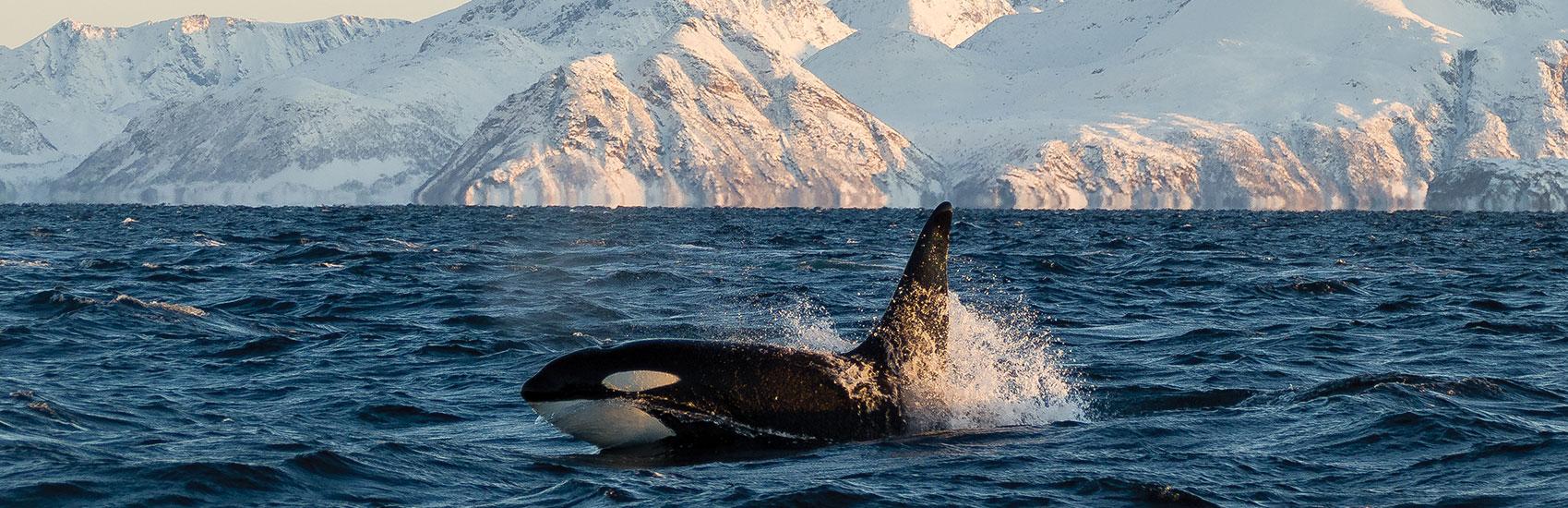 Holland America: Alaska's Top 5 Marine Mammals 3