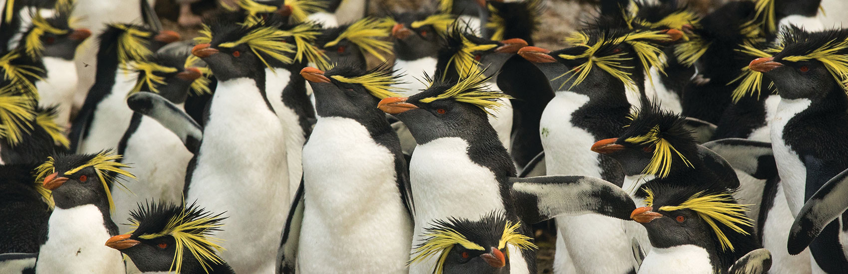 All-Inclusive Antarctica Experience with Silversea Cruises 4