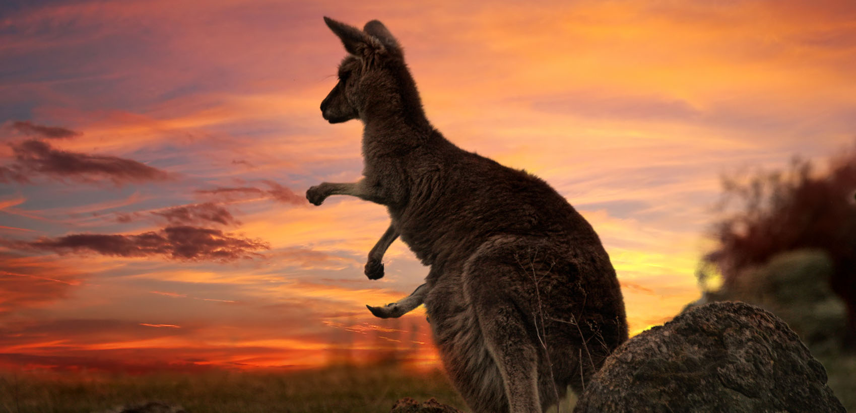 Experience Australia with all your senses