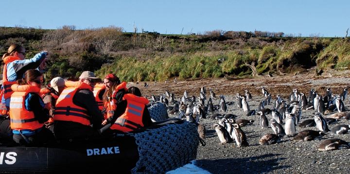 Australis Early Penguin Bonus