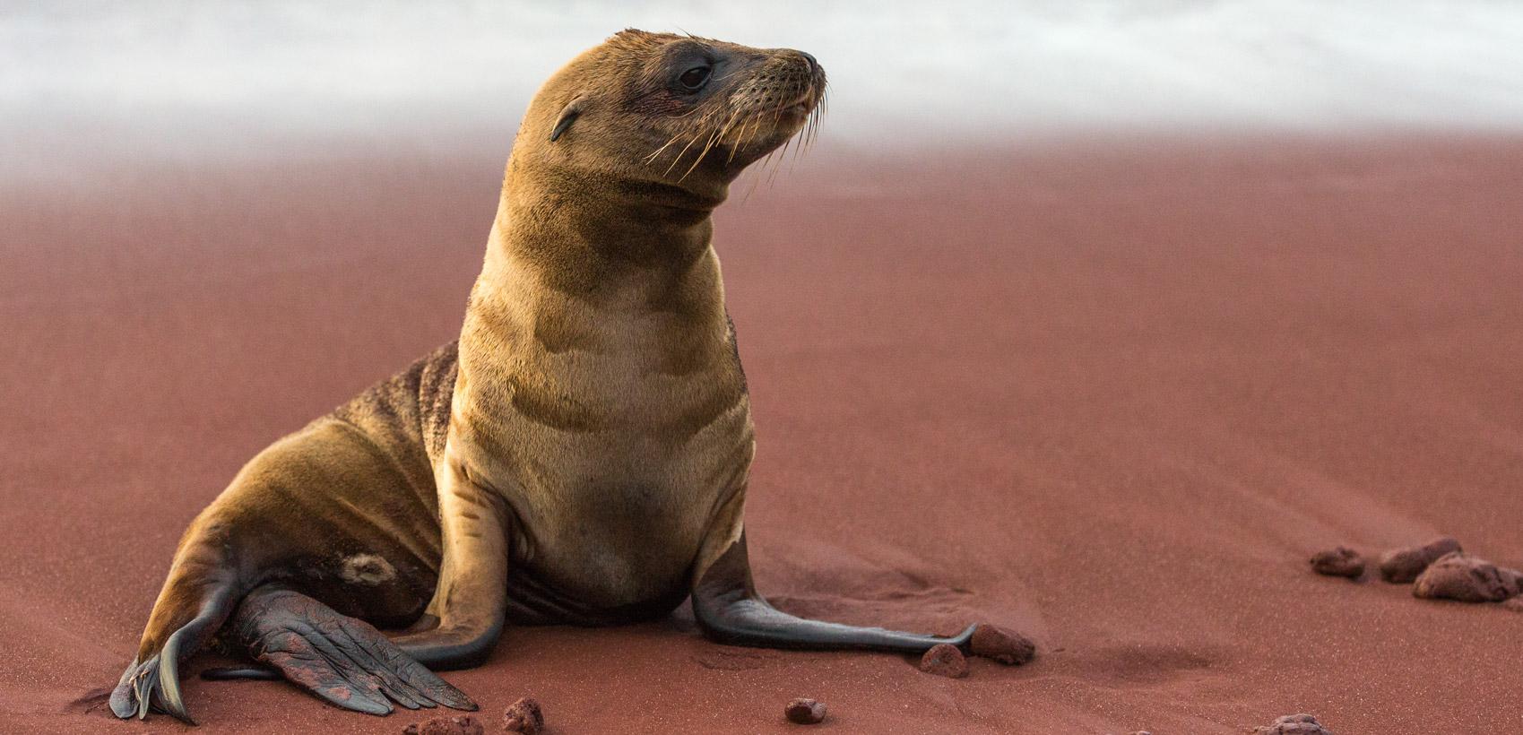 Legendary Galapagos 1